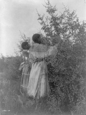 451px-Mandan_girls_gathering_berries