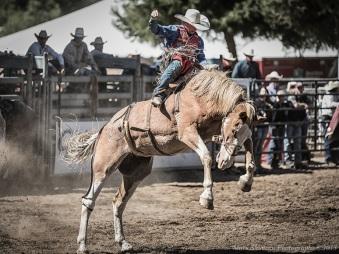 poway_rodeo_cowboy_horse_bronco_2